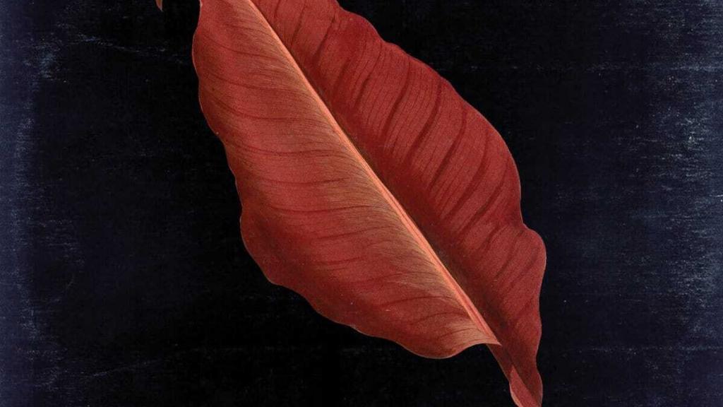snaer. - leaves - Tapeinvader